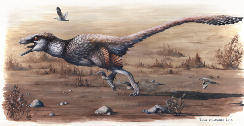 Beautiful reconstruction of Dakotaraptor by Emily Willoughby